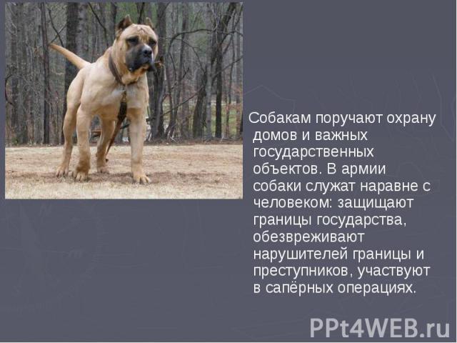 Собакам поручают охрану домов и важных государственных объектов. В армии собаки служат наравне с человеком: защищают границы государства, обезвреживают нарушителей границы и преступников, участвуют в сапёрных операциях. Собакам поручают охрану домов…