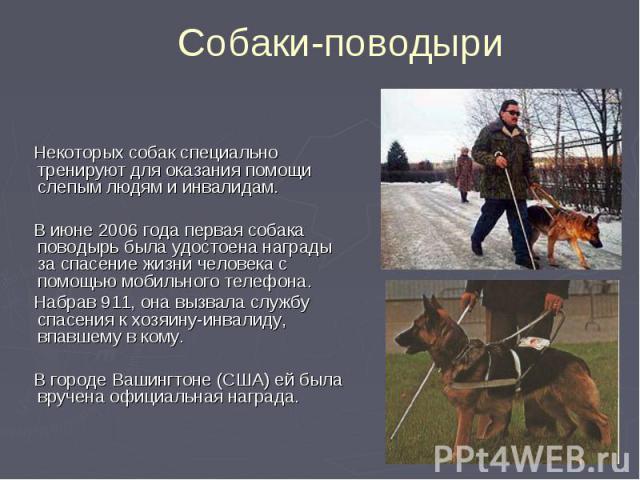 Некоторых собак специально тренируют для оказания помощи слепым людям и инвалидам. Некоторых собак специально тренируют для оказания помощи слепым людям и инвалидам. В июне 2006 года первая собака поводырь была удостоена награды за спасение жизни че…