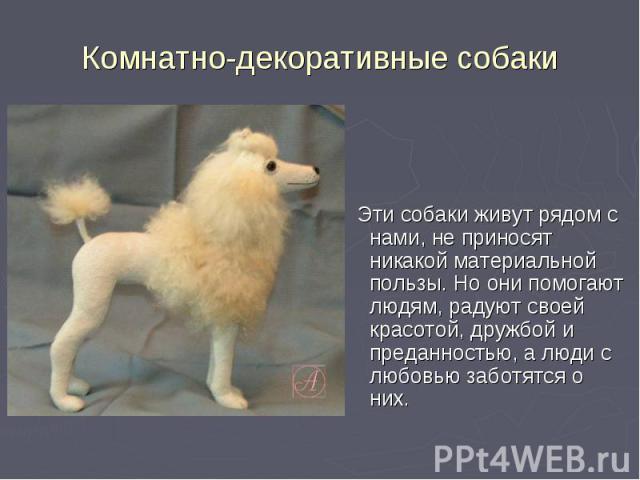 Эти собаки живут рядом с нами, не приносят никакой материальной пользы. Но они помогают людям, радуют своей красотой, дружбой и преданностью, а люди с любовью заботятся о них. Эти собаки живут рядом с нами, не приносят никакой материальной пользы. Н…