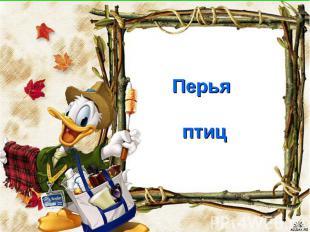 Перья птиц