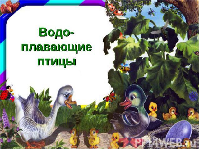 Водо-плавающие птицы