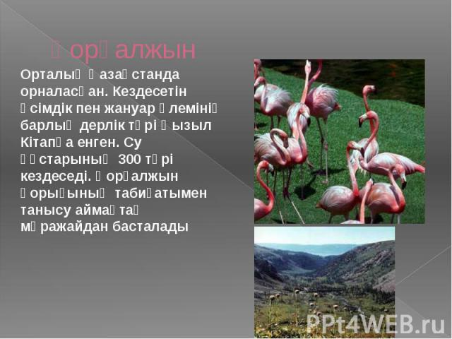 Қорғалжын Орталық Қазақстанда орналасқан. Кездесетін өсімдік пен жануар әлемінің барлық дерлік түрі Қызыл Кітапқа енген. Су құстарының 300 түрі кездеседі. Қорғалжын қорығының табиғатымен танысу аймақтақ мұражайдан басталады