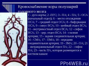 Кровоснабжение коры полушарий головного мозга 1 - дуга аорты; 2 -ПГС; 3 - ПА; 4