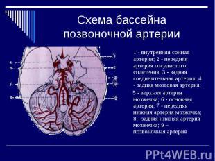 Схема бассейна позвоночной артерии 1 - внутренняя сонная артерия; 2 - передняя а