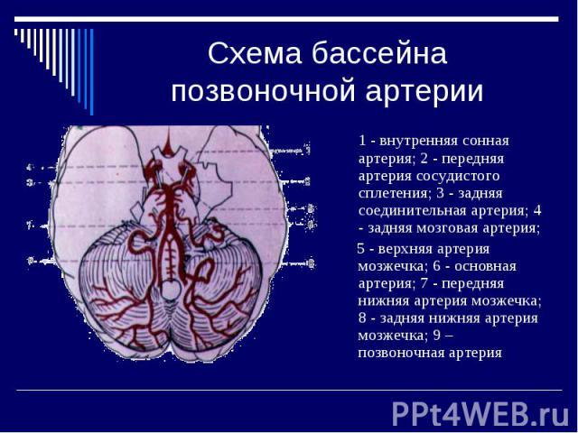 Схема бассейна позвоночной артерии 1 - внутренняя сонная артерия; 2 - передняя артерия сосудистого сплетения; 3 - задняя соединительная артерия; 4 - задняя мозговая артерия; 5 - верхняя артерия мозжечка; 6 - основная артерия; 7 - передняя нижняя арт…