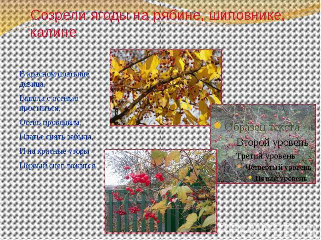 Созрели ягоды на рябине, шиповнике, калине В красном платьице девица, Вышла с осенью проститься, Осень проводила, Платье снять забыла. И на красные узоры Первый снег ложится