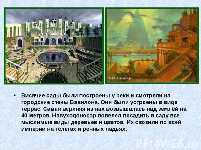 Висячие сады были построены у реки и смотрели на городские стены Вавилона. Они были устроены в виде террас. Самая верхняя из них возвышалась над землёй на 40 метров. Навуходоносор повелел посадить в саду все мыслимые виды деревьев и цветов. Их свози…