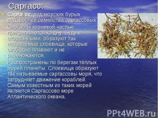 Саргасс:Саргасс, род морских бурых водорослей семейства саргассовых.Саргассы кор