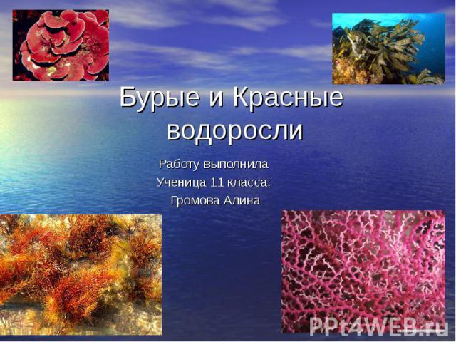 Бурые и Красные водорослиРаботу выполнила Ученица 11 класса: Громова Алина