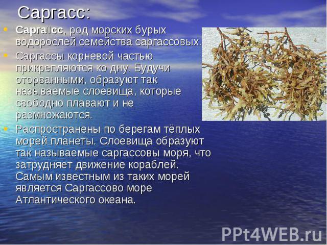 Саргасс:Саргасс, род морских бурых водорослей семейства саргассовых.Саргассы корневой частью прикрепляются ко дну. Будучи оторванными, образуют так называемые слоевища, которые свободно плавают и не размножаются.Распространены по берегам тёплых море…