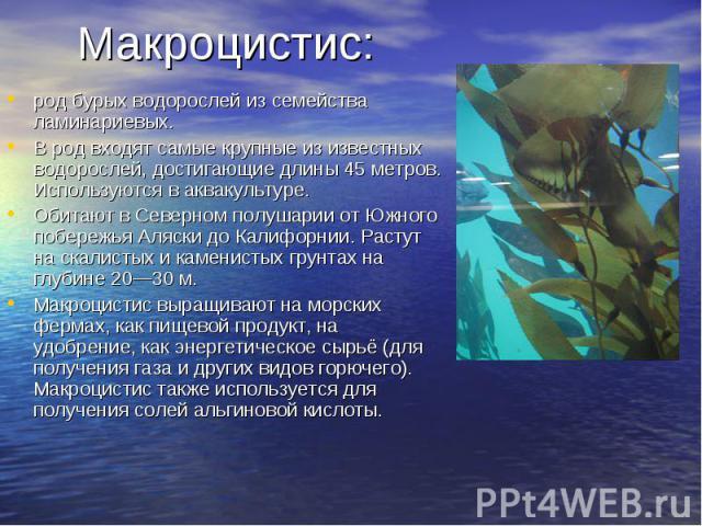Макроцистис:род бурых водорослей из семейства ламинариевых. В род входят самые крупные из известных водорослей, достигающие длины 45 метров. Используются в аквакультуре. Обитают в Северном полушарии от Южного побережья Аляски до Калифорнии. Растут н…