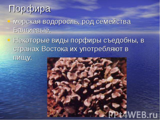 Порфираморская водоросль, род семейства Бангиевые. Некоторые виды порфиры съедобны, в странах Востока их употребляют в пищу.