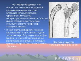 Фон Мейер обнаружил, что головка кости покрыта изощренной сетью миниатюрных кост