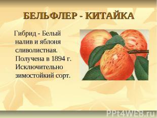 БЕЛЬФЛЕР - КИТАЙКА Гибрид - Белый налив и яблоня сливолистная. Получена в 1894 г