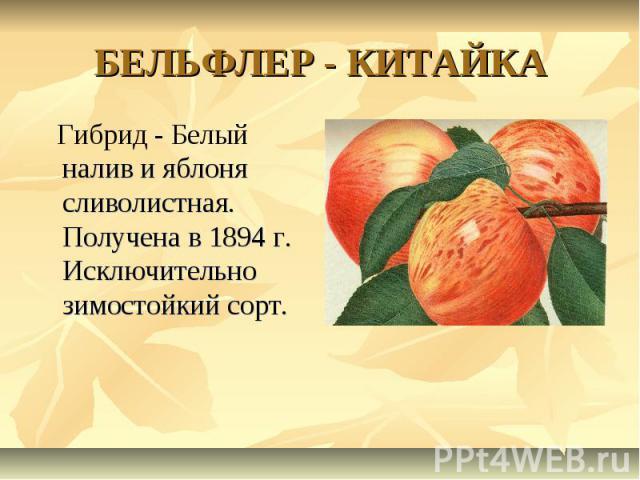 БЕЛЬФЛЕР - КИТАЙКА Гибрид - Белый налив и яблоня сливолистная. Получена в 1894 г. Исключительно зимостойкий сорт.