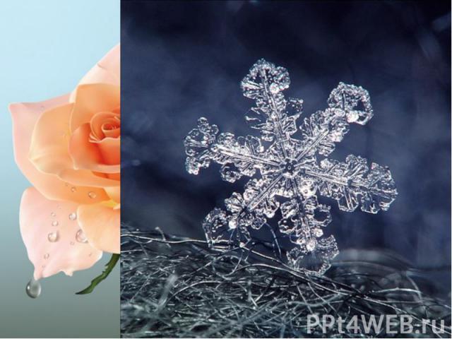 О симметрия! Гимн тебе пою! Тебя повсюду узнаю. Ты в Эйфелевой башне, В малой мошке, Ты в ёлочке, что у лесной дорожки. С тобою в дружбе и тюльпан и роза, И снежный рой – творение мороза!