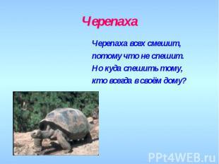 Черепаха Черепаха всех смешит,потому что не спешит.Но куда спешить тому,кто всег