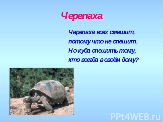 Черепаха Черепаха всех смешит,потому что не спешит.Но куда спешить тому,кто всегда в своём дому?