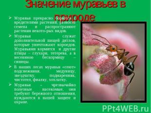 Значение муравьев в природе: Муравьи прекрасно борются с вредителями растений, р
