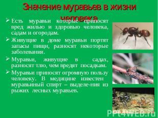 Значение муравьев в жизни человека: Есть муравьи которые приносят вред жилью и з