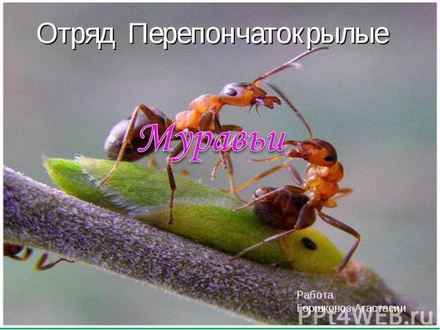 Отряд Перепончатокрылые МуравьиРабота Горшковоз Агастасии