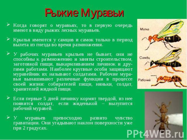 Рыжие Муравьи Когда говорят о муравьях, то в первую очередь имеют в виду рыжих лесных муравьев.Крылья имеются у самцов и самок только в период вылета из гнезда во время размножения.У рабочих муравьев крыльев не бывает, они не способны к размножению …