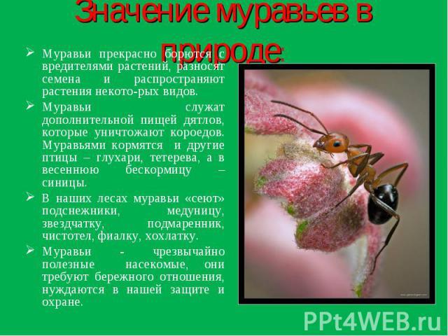 Значение муравьев в природе: Муравьи прекрасно борются с вредителями растений, разносят семена и распространяют растения некото-рых видов.Муравьи служат дополнительной пищей дятлов, которые уничтожают короедов. Муравьями кормятся и другие птицы – гл…