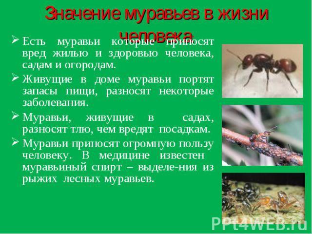 Значение муравьев в жизни человека: Есть муравьи которые приносят вред жилью и здоровью человека, садам и огородам.Живущие в доме муравьи портят запасы пищи, разносят некоторые заболевания.Муравьи, живущие в садах, разносят тлю, чем вредят посадкам.…