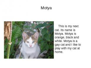 Motya This is my next cat. Its name is Motya. Motya is orange, black and white.