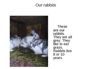 Our rabbits These are our rabbits. They are all grey. They like to eat grass. Ra