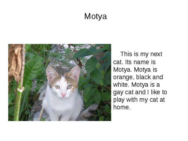 Motya This is my next cat. Its name is Motya. Motya is orange, black and white. Motya is a gay cat and I like to play with my cat at home.
