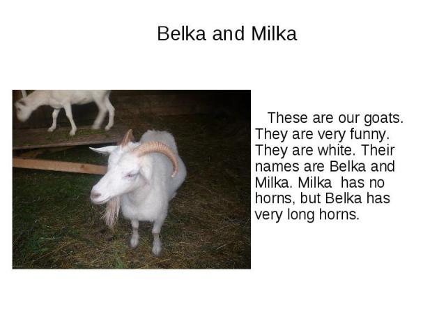 Belka and Milka These are our goats. They are very funny. They are white. Their names are Belka and Milka. Milka has no horns, but Belka has very long horns.
