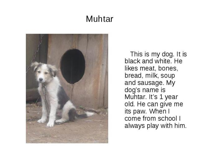 Muhtar This is my dog. It is black and white. He likes meat, bones, bread, milk, soup and sausage. My dog's name is Muhtar. It's 1 year old. He can give me its paw. When I come from school I always play with him.
