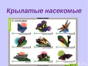 Крылатые насекомые