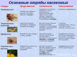 Основные отряды насекомых
