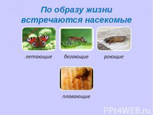 По образу жизни встречаются насекомые