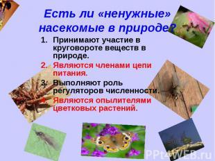 Есть ли «ненужные» насекомые в природе? Принимают участие в круговороте веществ