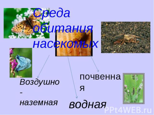 Среда обитания насекомых Воздушно-наземнаяпочвеннаяводная