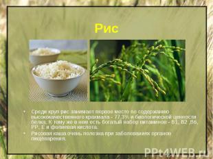 Рис Среди круп рис занимает первое место по содержанию высококачественного крахм