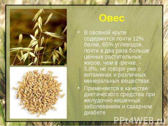 Овес В овсяной крупе содержится почти 12% белка, 65% углеводов, почти в два раза больше ценных растительных жиров, чем в гречке, - 5,8%, не говоря уже о витаминах и различных минеральных веществах.Применяется в качестве диетического средства при жел…