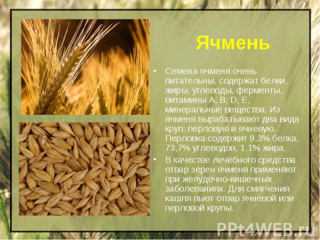 Ячмень Семена ячменя очень питательны, содержат белки, жиры, углеводы, ферменты, витамины А, В, D, Е, минеральные вещества. Из ячменя вырабатывают два вида круп: перловую и ячневую. Перловка содержит 9,3% белка, 73,7% углеводов, 1,1% жира. В качеств…