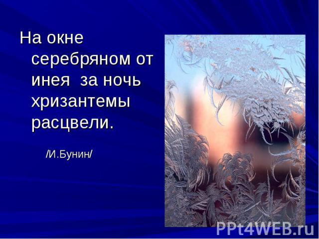 На окне серебряном от инея за ночь хризантемы расцвели. /И.Бунин/