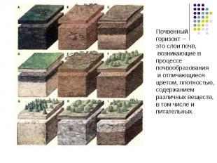 Почвенныйгоризонт – это слои почв, возникающие впроцессепочвообразования и отлич