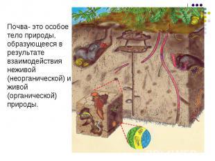 Почва- это особоетело природы,образующееся врезультатевзаимодействиянеживой (нео