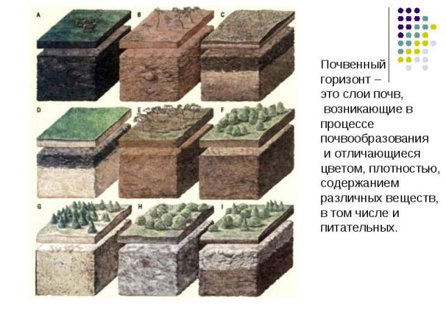 Почвенныйгоризонт – это слои почв, возникающие впроцессепочвообразования и отличающиеся цветом, плотностью,содержаниемразличных веществ,в том числе и питательных.