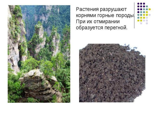Растения разрушают корнями горные породы.При их отмирании образуется перегной.