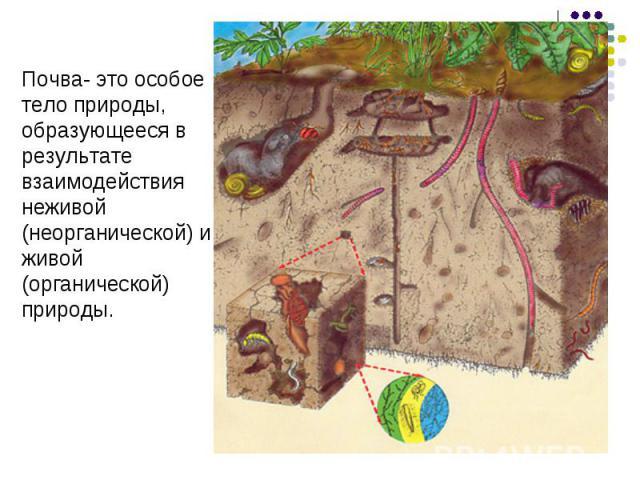 Почва- это особоетело природы,образующееся врезультатевзаимодействиянеживой (неорганической) и живой(органической)природы.