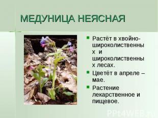 МЕДУНИЦА НЕЯСНАЯ Растёт в хвойно-широколиственных и широколиственных лесах.Цветё