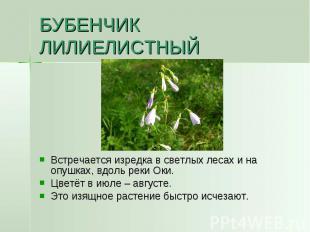 БУБЕНЧИК ЛИЛИЕЛИСТНЫЙ Встречается изредка в светлых лесах и на опушках, вдоль ре