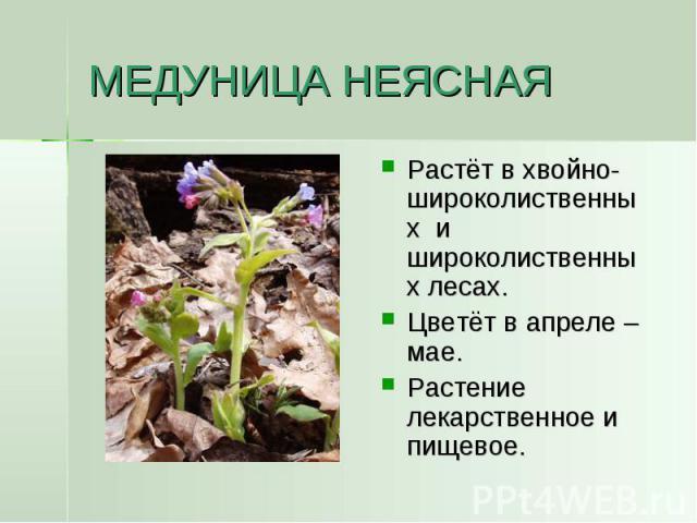 МЕДУНИЦА НЕЯСНАЯ Растёт в хвойно-широколиственных и широколиственных лесах.Цветёт в апреле – мае.Растение лекарственное и пищевое.